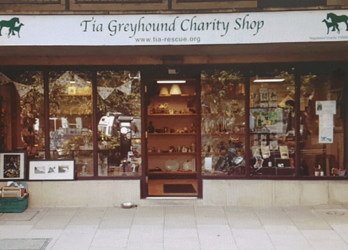 Greyhound-Doncaster-charity-shops